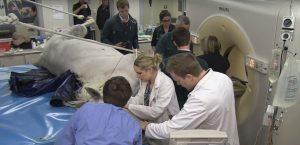 Massey Equine Vet School Surgery